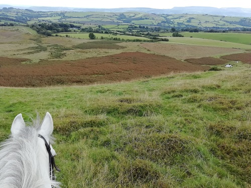 Trail ride out in the welsh mountains at Bryngwyn riding centre
